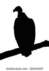 Detailed Portrait Silhouette of Large Vulture on Branch