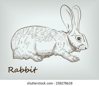 detailed rabbit on background. vector sketches.