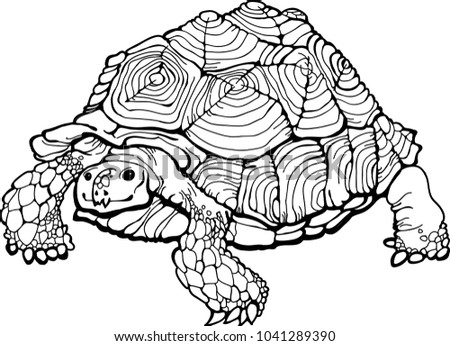 Detailed Turtle Coloring Page Coloring Book Stock Vector (Royalty ...
