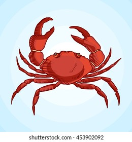 Detailed vector drawing of a sea crab