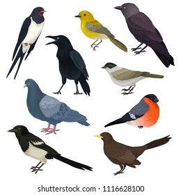 Detailed vector icons of different species of birds. Wildlife or fauna theme. Elements for ornithology book, print or promo poster