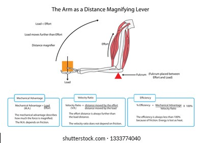 Diagram of the arm as a simple lever with descriptions and formulae. EPS 10