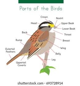 a diagram of a bird's body parts  captions are connected with a thin black  line