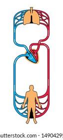 diagram of blood circulation