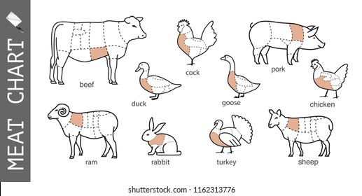 Diagram of cutting meat. Set of vector signs on white background. Ready to use for your design, presentation, promo, adv. EPS10.