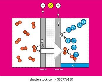 Diagram describing a fuel cell.