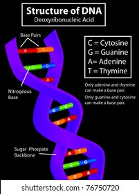 Diagram of a DNA strand