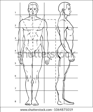 Diagram Human Body How Draw Person Stock Vector Royalty Free