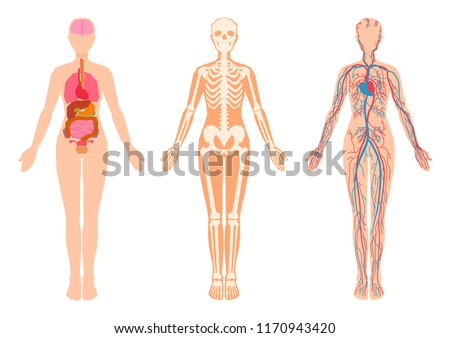 Diagram Human Body Internal Organs Skeleton Stock Vector Royalty