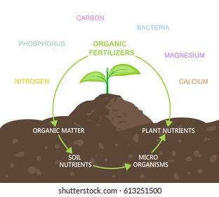 Diagram of nutrients in organic fertilizers. Plant and soil. Vector illustration flat design