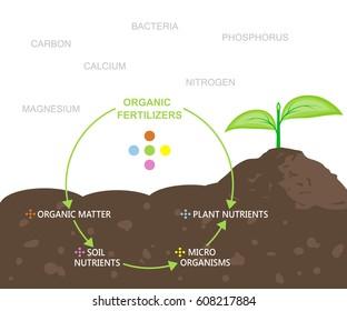 Diagram of nutrients in organic fertilizers. Vector illustration flat design