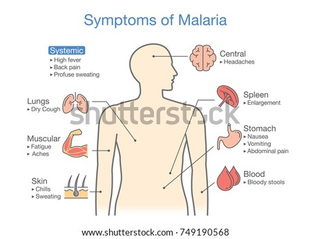 diagram patient malaria symptoms appear illustration stock vectordiagram for patient with malaria symptoms appear illustration about medical and health