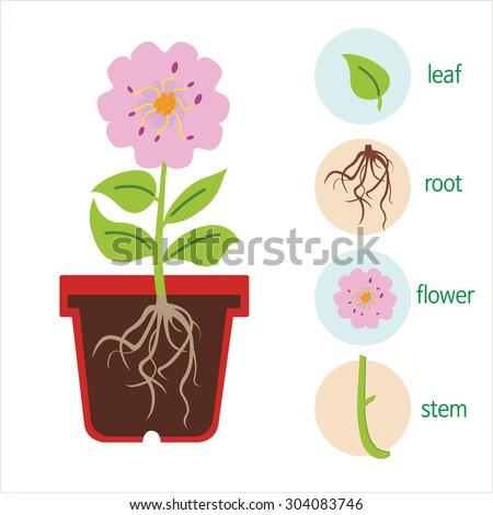 Diagram plant flower consists stem roots stock vector royalty free diagram plant flower consists stem roots stock vector royalty free 304083746 shutterstock ccuart Choice Image