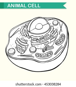 Animal Cell Images Stock Photos Vectors Shutterstock