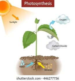Photosynthesis diagram images stock photos vectors shutterstock a diagram showing how photosynthesis works on plants ccuart Choice Image