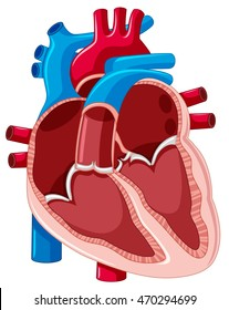 Diagram of the human heart images stock photos vectors shutterstock diagram showing inside of human heart illustration ccuart Images