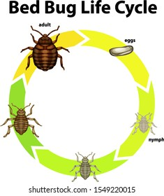 Insect Life Cycle Photos 12 341 Insect Life Stock Image