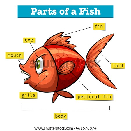 Diagram Of A Fish And Its Parts Wiring Diagram Services