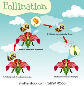 Diagram showing pollination with bee and flowers illustration