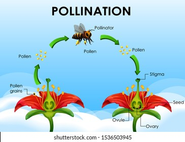 Diagram showing pollination cycle illustration