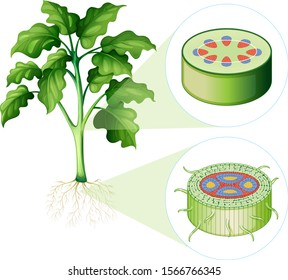 Diagram showing stem and root cell illustration