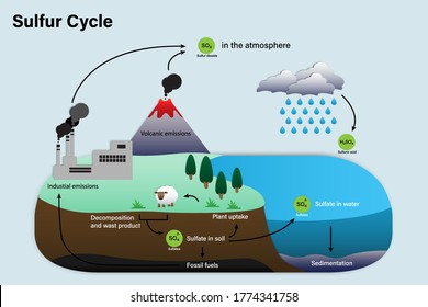 Diagram of Sulfur cycle, Biogeochemical cycle for education chart