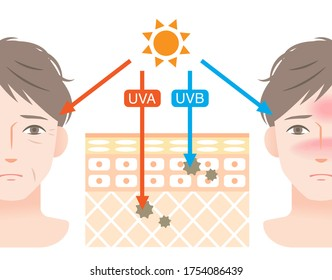 diagram of uva and uvb  penetration into human skin with man's face. Beauty and health care concept