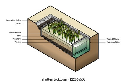 Diagram: waste water treatment using wetland plants / reed bed.
