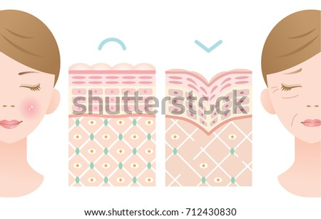Diagram Young Old Skin Woman Face Stock Vector Royalty Free