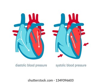 Diastolic and systolic blood pressure. Vector illustration in flat style for medical websites, infographics, books etc.