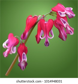 Dicentra burning hearts flowers