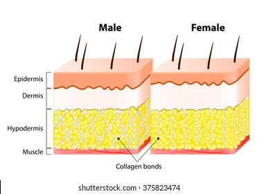 Differences in Male and female Skin.