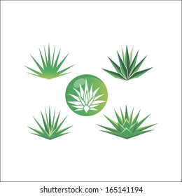 Different abstract  icons with agave