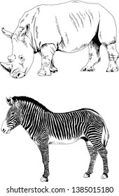 different animals hand-drawn ink sketch without background, Rhino and zebra