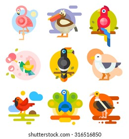Different birds: pelican, flamingo, toucan, parrot, hummingbird, eagle, seagull, peacock. Vector flat Illustrations