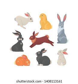 Different breeds of cute rabbits vector illustration