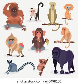Different cartoon monkey breed character animal wild zoo ape chimpanzee vector illustration.