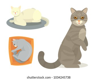 Different cat cute kitty pet cartoon cute animal cattish character set catlike illustration