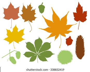 Different colored autumn leaves on white background illustration