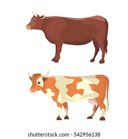 different cows, isolated Vector illustration. Mammal funny animals. Set milk cow