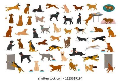 diferentes razas de perros y ambientes, mascotas juegan corriendo saltando comiendo durmiendo, sentadas y caminando, robando comida, ladrando, protegiendo. gráfico ilustrativo vectorial aislado