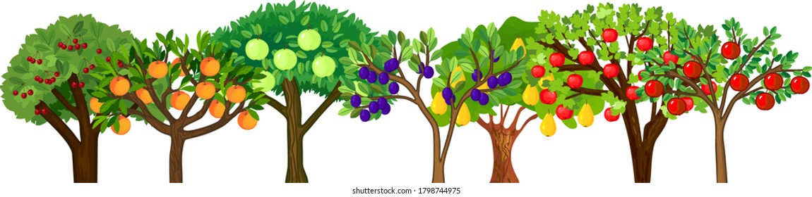 Different fruit trees with ripe fruits isolated on white background. Harvest time