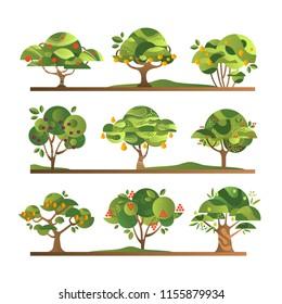 Different fruit trees set, apple, orange, lemon, pear, rowan, apricot, plum, cherry tree with ripe fruits vector Illustrations on a white background