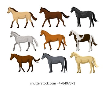 Different Horses Set in typical coat colors: black, chestnut, dapple grey, dun, bay, cream, buckskin, palomino, tobiano