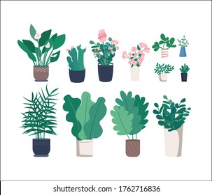 Different houseplants flat color vector objects set. Decoration for home office. Flower in container. Variety of potted plants 2D isolated cartoon illustrations on white background