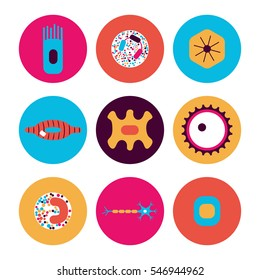 Different human cell types icon set. Stock vector illustration of bone, nerve, epithelial, muscle, blood, stem, sperm and oocyte in a circle in bright colors. Medicine and biology collection