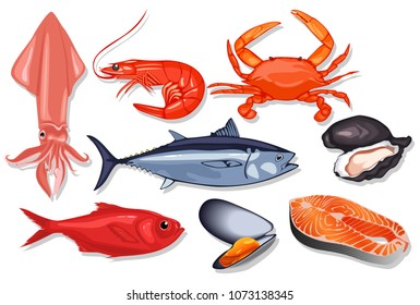 Different kind of fresh seafood. Vector mussel, fish salmon, shrimp, squid, craps, mollusk, oyster, red perch and tuna.