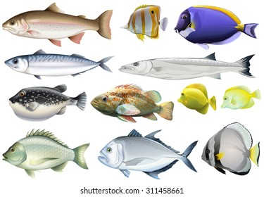 Different kind of ocean fish illustration