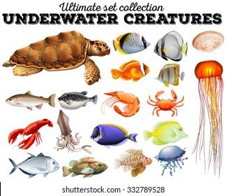 Different kind of sea animals illustration