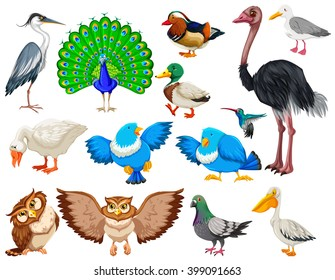 Different kind of wild birds illustration